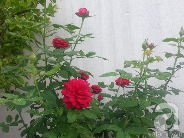 chăm sóc cây hoa